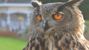 Falconry Experience Willows Bird Of Prey Centre Groupon