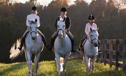 Horseback Riding Lessons A Amp T Equestrian Centre Groupon