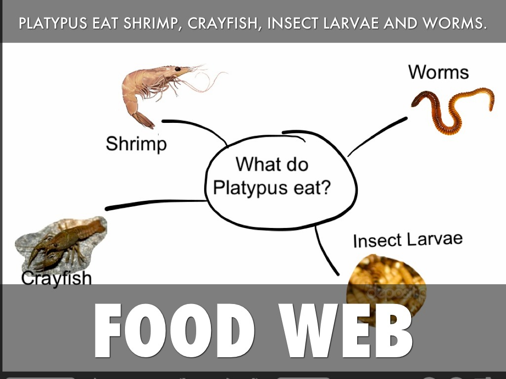 Marine Food Web Worksheet