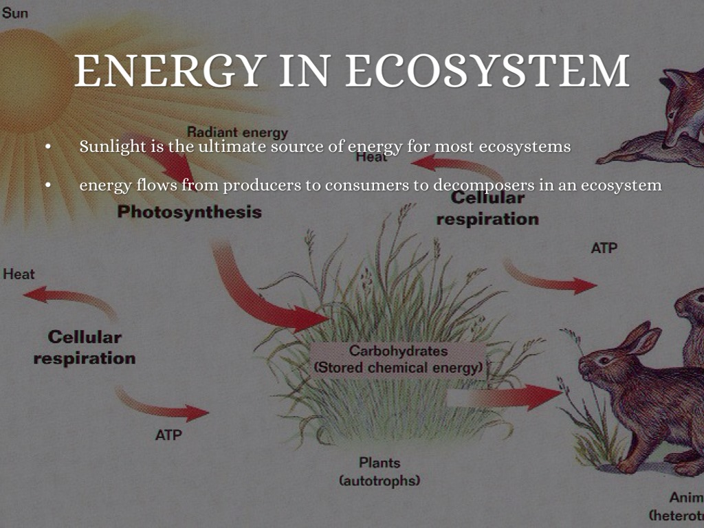 Ecosystem And Energy Flow Flip Book By Keely Watkins