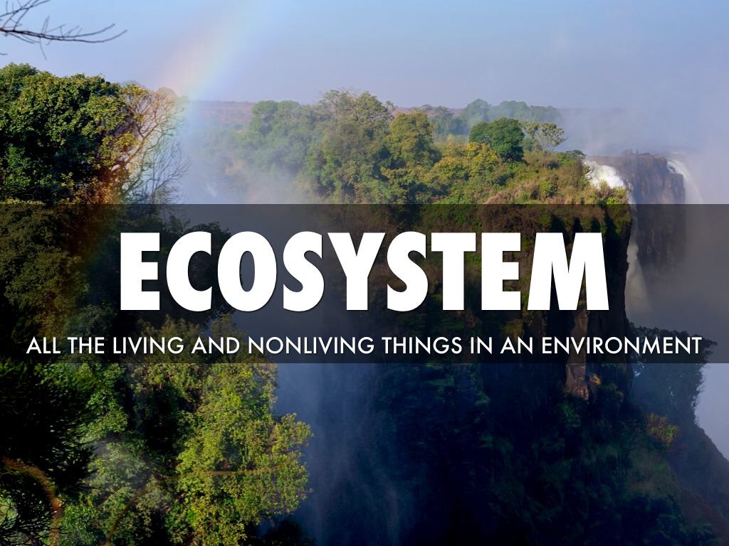 Arjun Chapter2 Living Things And Their Environment By
