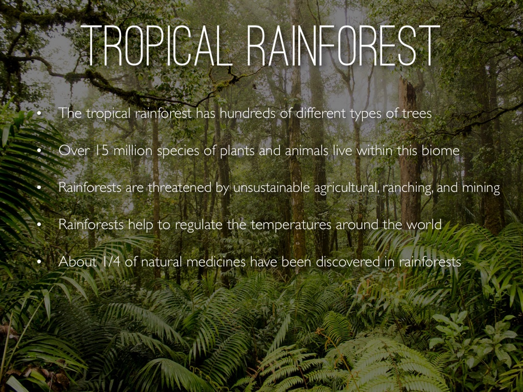 The traditional seasons of spring, summer, fall and winter are absent in rain fore the tropical rain forest has two seasons: Tropical Rainforest By Sophie Catanzaro