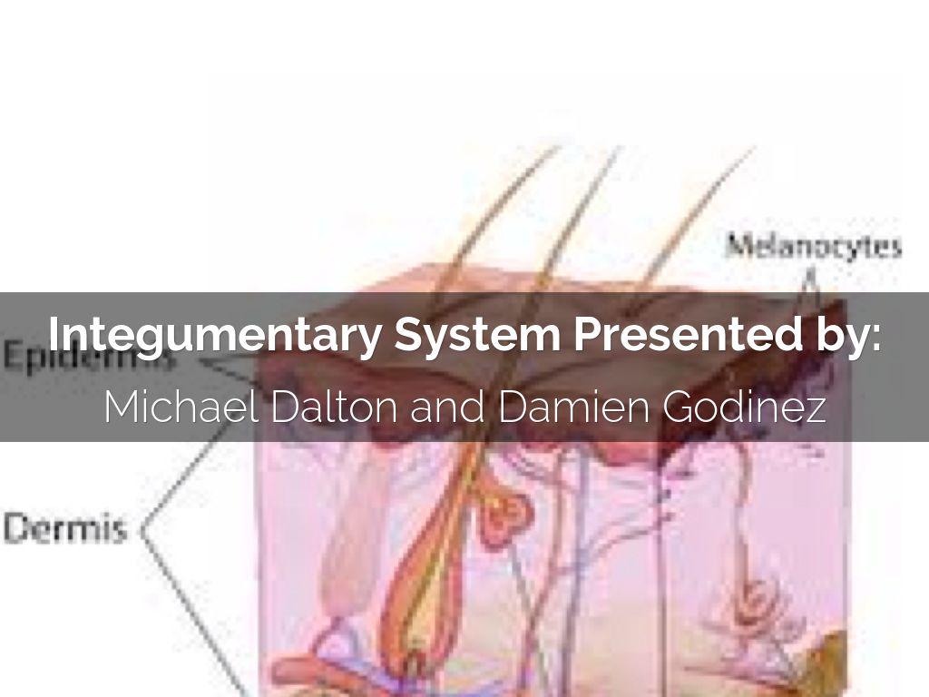 Integumentary System By Michael Dalton