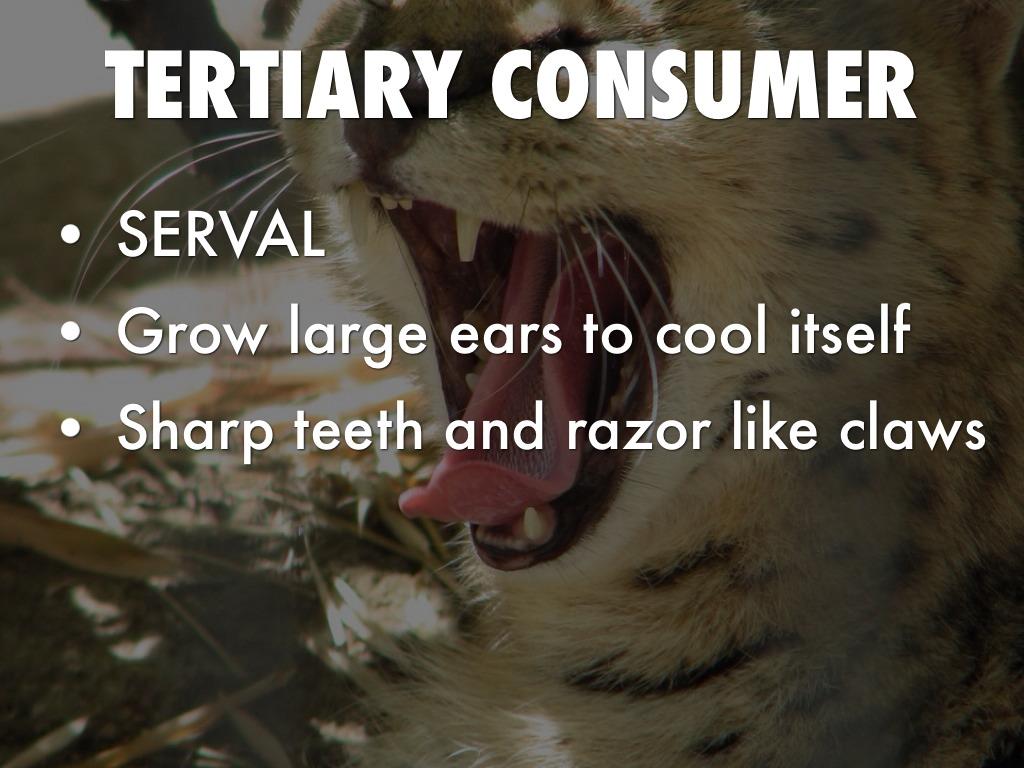 Consumers Desert Tirseary