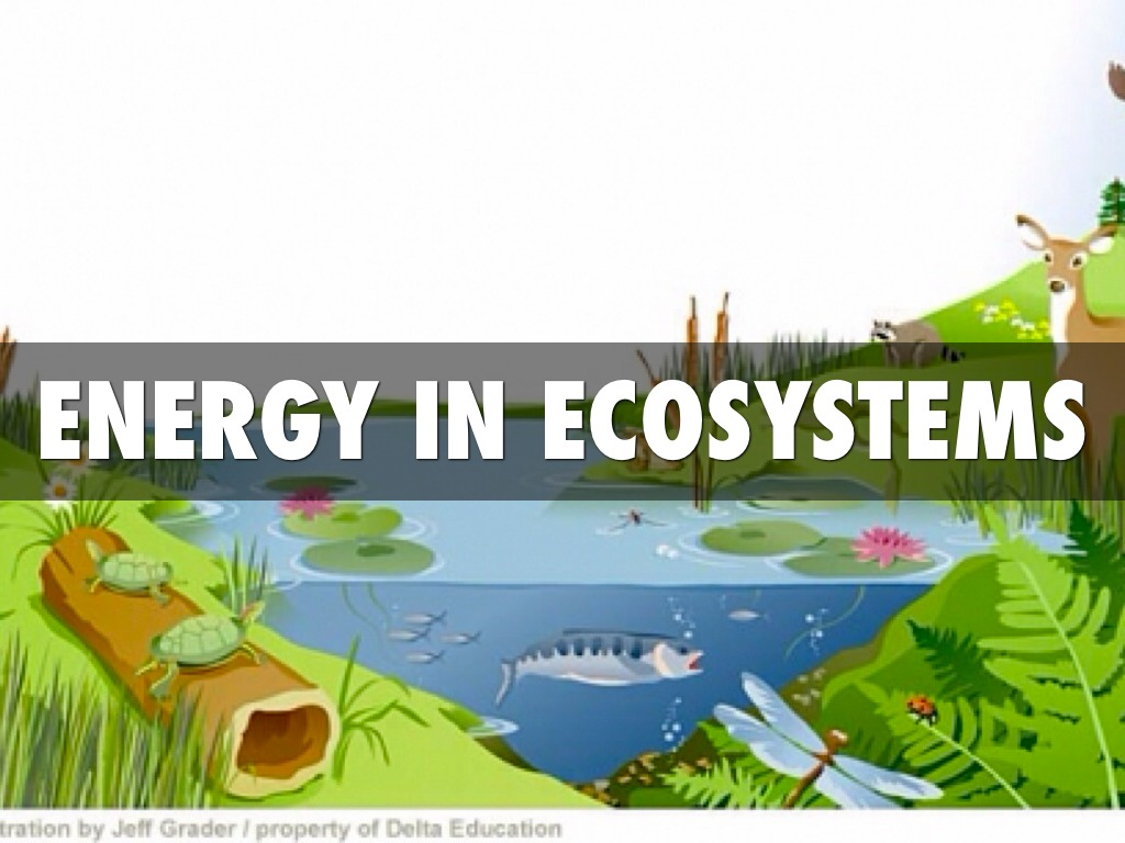 Energy In Ecosystems By Allison Puckett