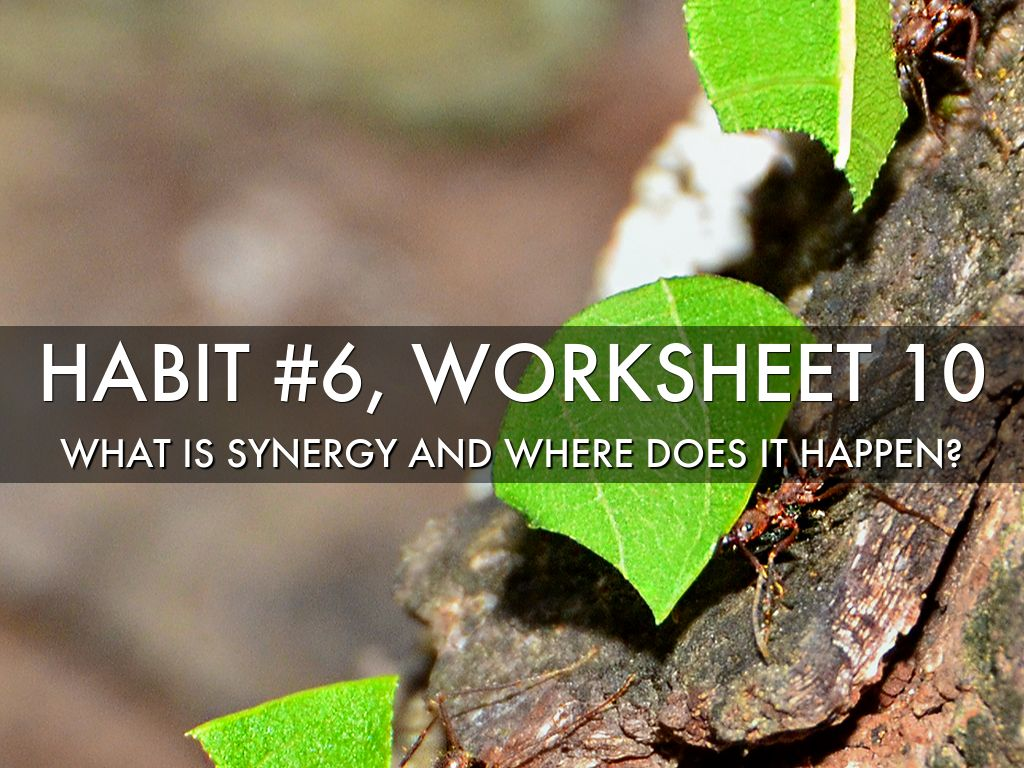 Habit 6 By Whitmanj