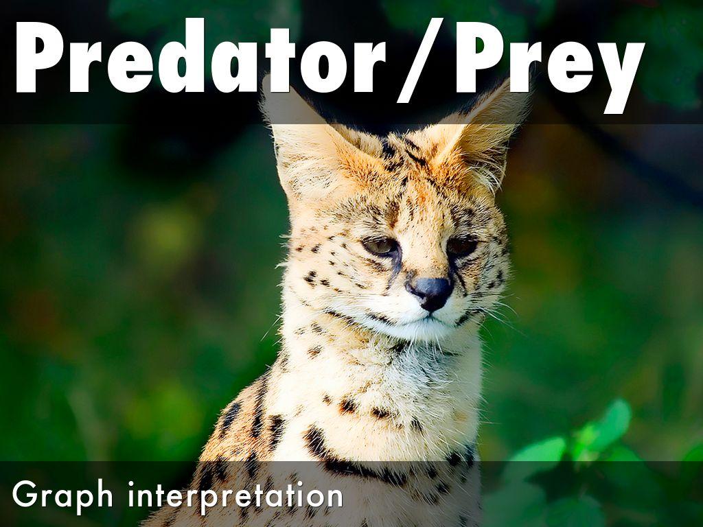 Predator Prey Graph By Chris Byron