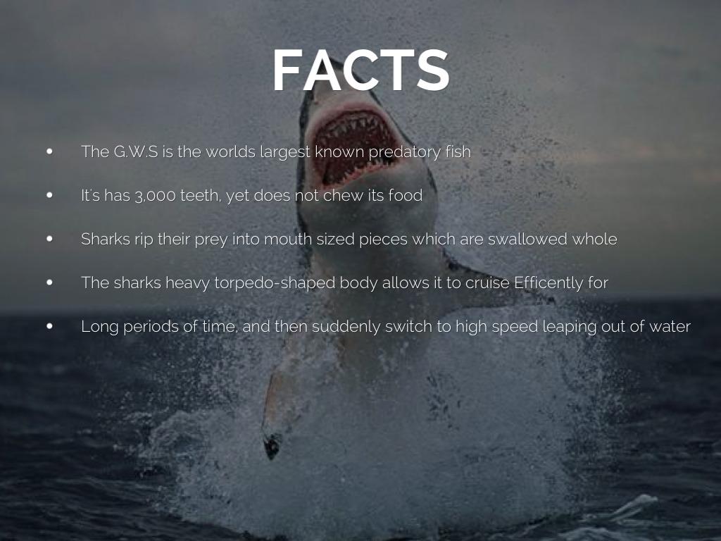 The Great White Shark By Amber Mccallum