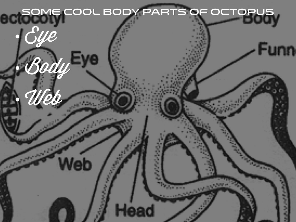 Octopus Picture Body Parts Labeled