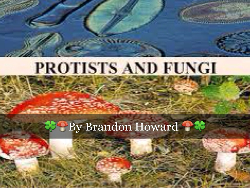 Protists And Fungi By Brandon Howard