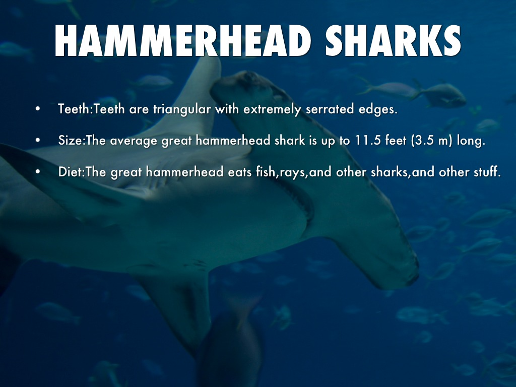 Hammerhead Sharks By Kelsey Andrews