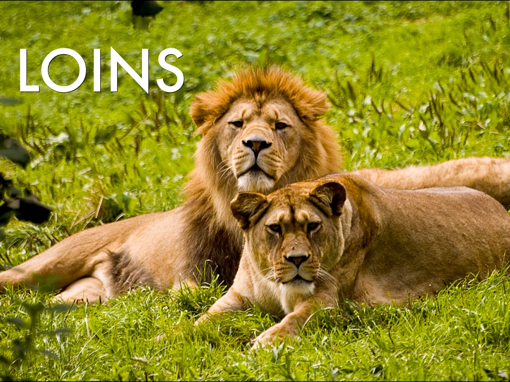 All About Lions By Virginia Pugh