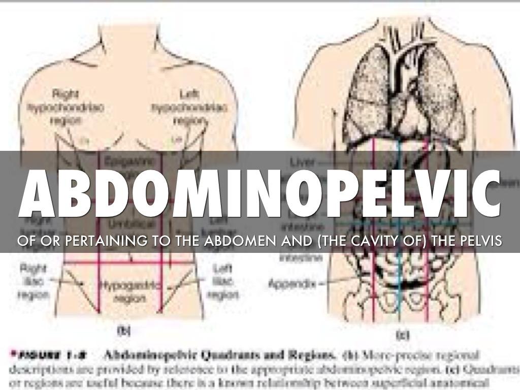 Anatomy Terms By Erin Pennington