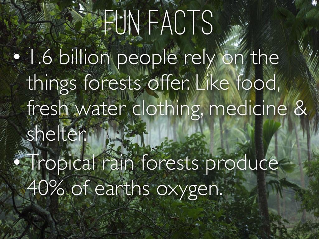 Tropical Rain Forest By Courtney Pratt