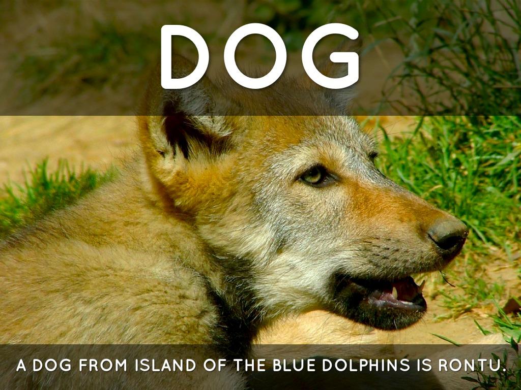 Blue Dolphins Devilfish Island