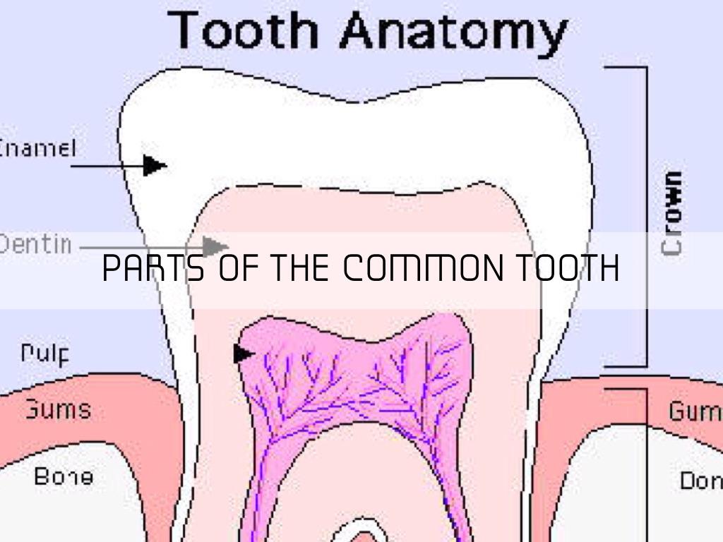 Teeth By Hannah Mills