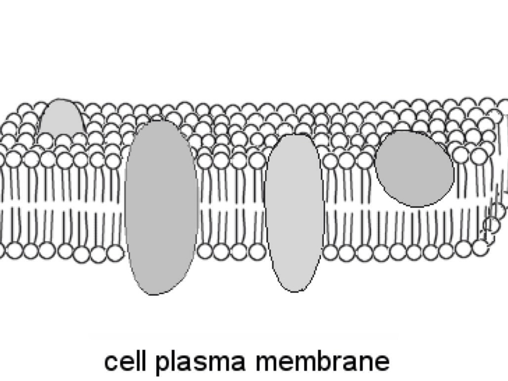 Black And White Cell Membrane Diagram Pictures To Pin On