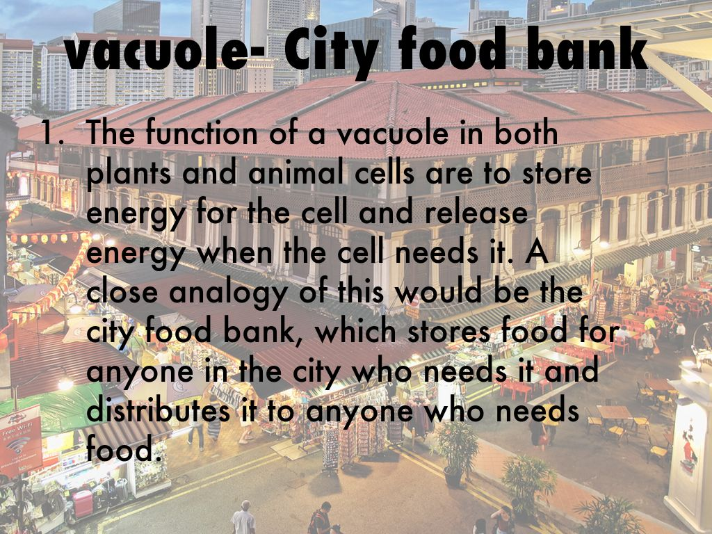Animal Cell Compared To A City By Janelisanchez18