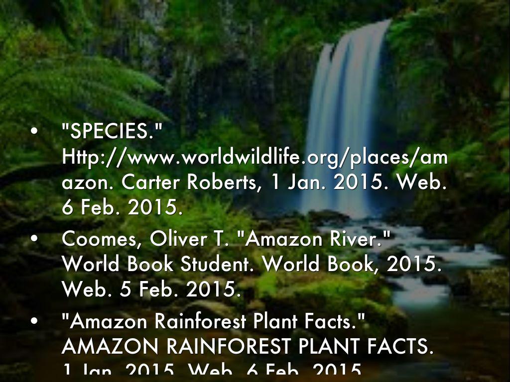 Amazon Rainforest By