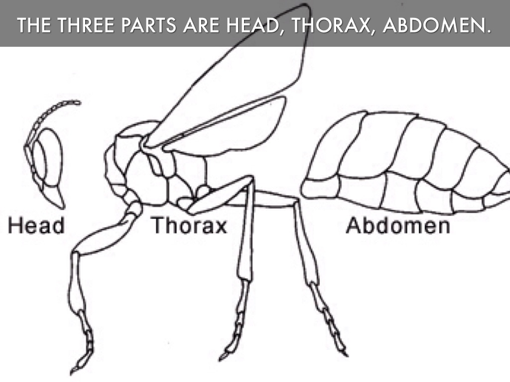 Lower Abdoman Diagram