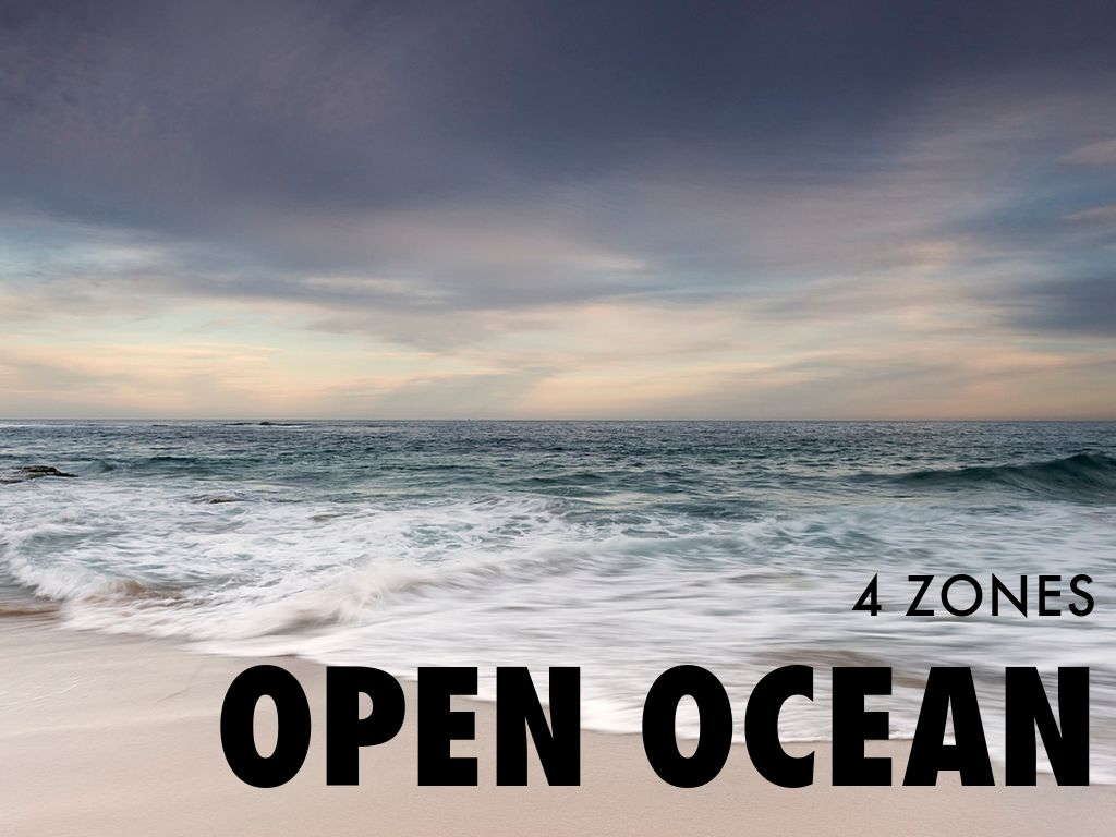 Marine Ecosystem By Cheryl Massengale