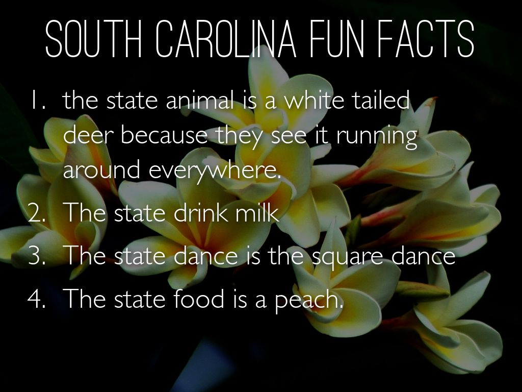 South Carolina Facts Information Pictures Encyclopedia Jasmine And Brandon Present South