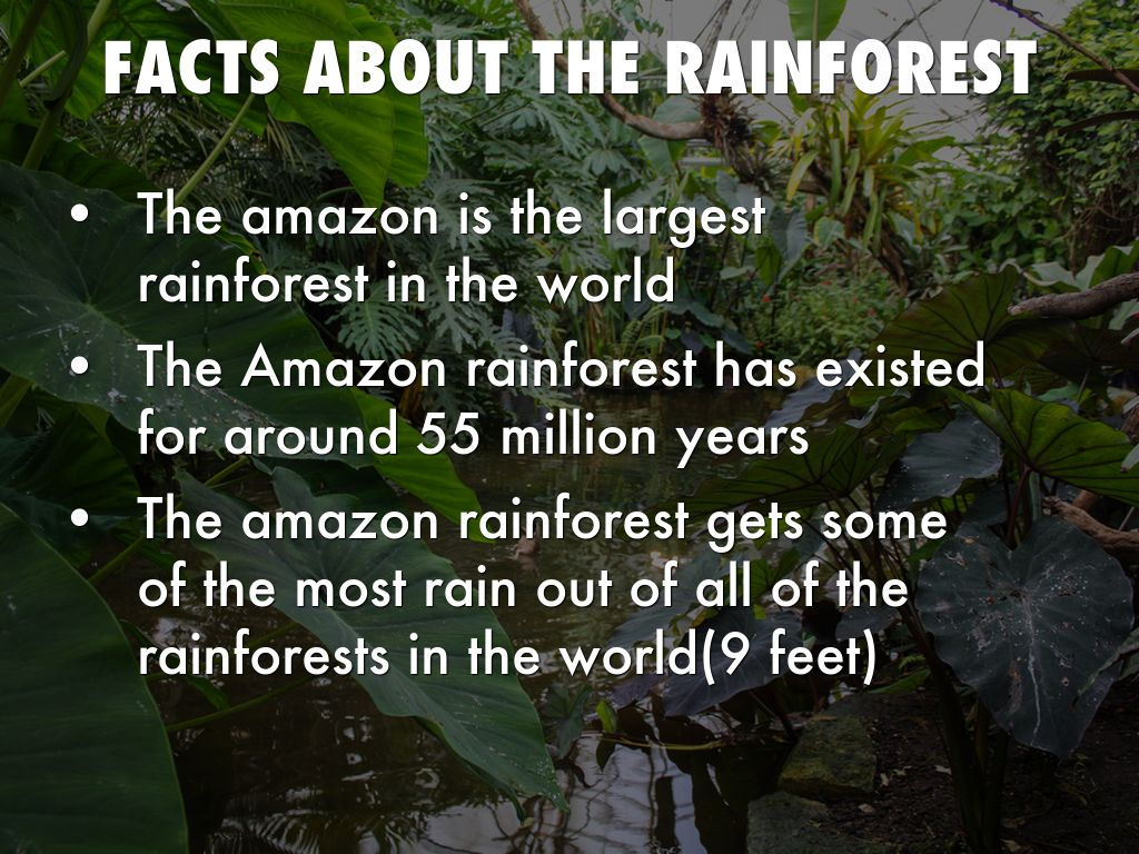 Amazon Rain Forest Avery D By Shannon Cullen
