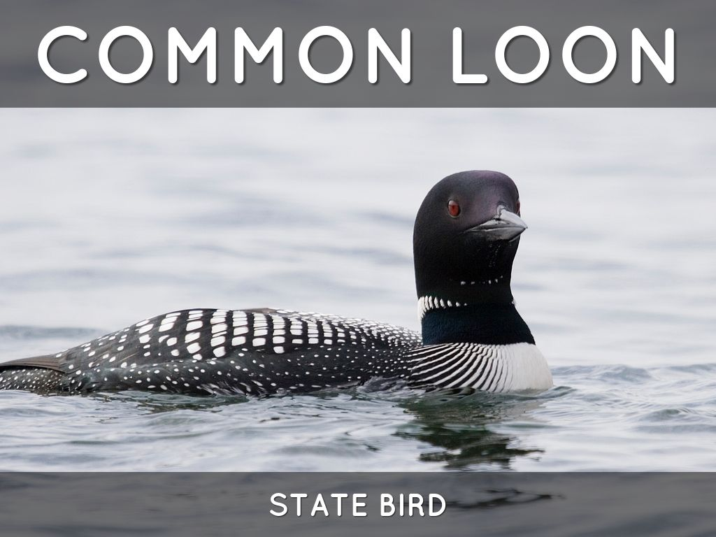 Minnesota State Symbols By Todd Tinklenberg