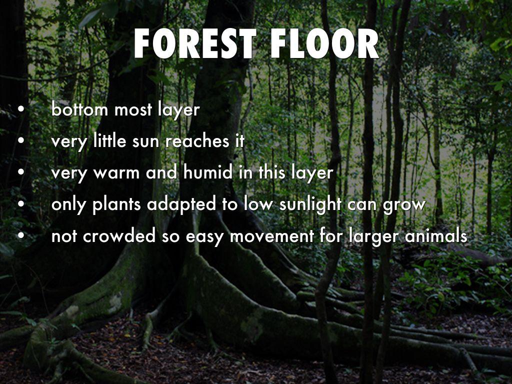 Tropical Rainforest By Sapeeda A