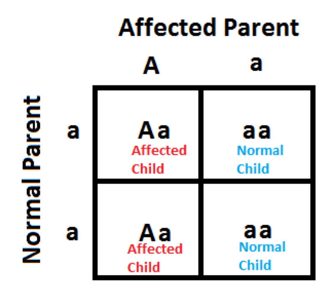 Cystic Fibrosis Punnett Square Parents That Are