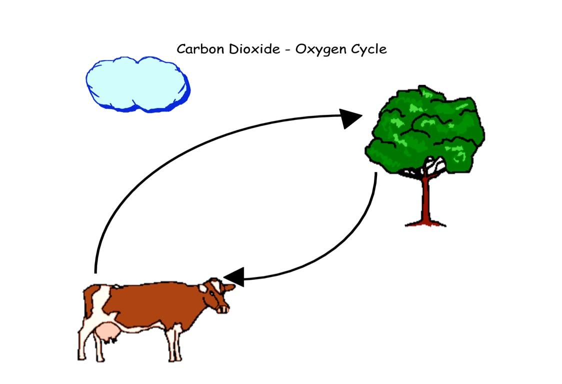 Carbon Oxygen Cycle Diagram Worksheet