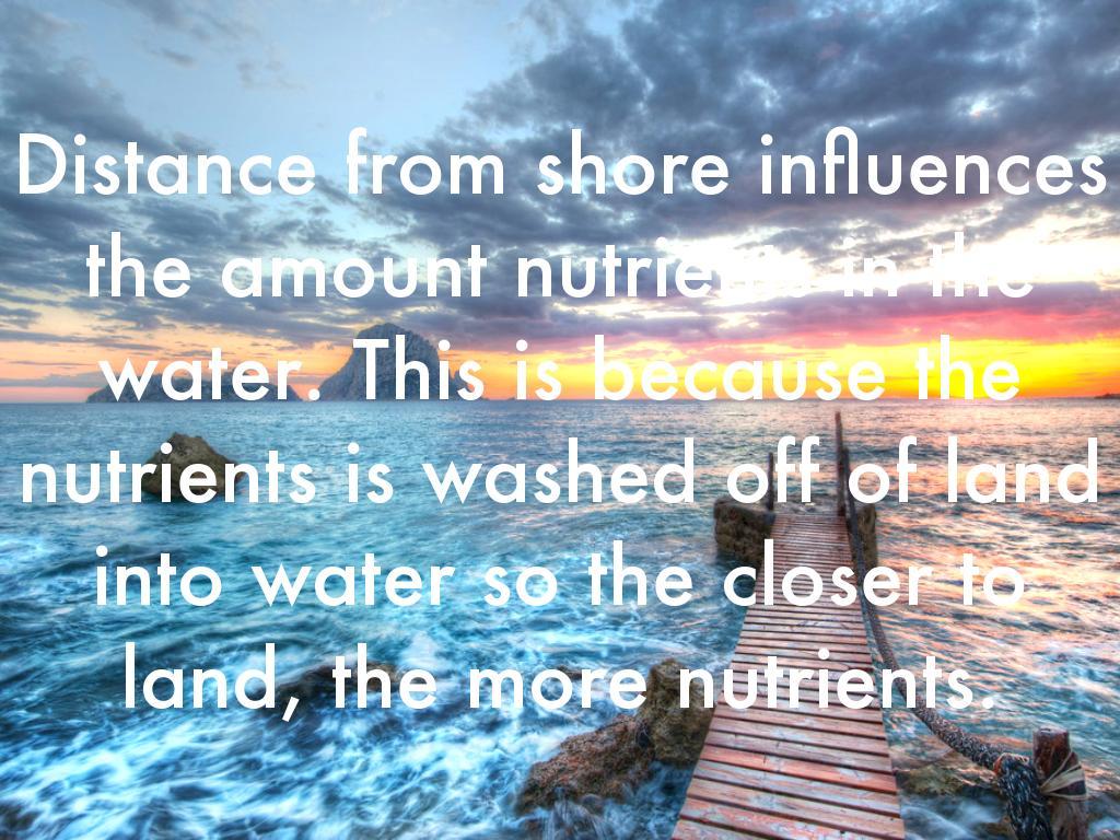 Ocean Life Zones By Naomi Heggemeier