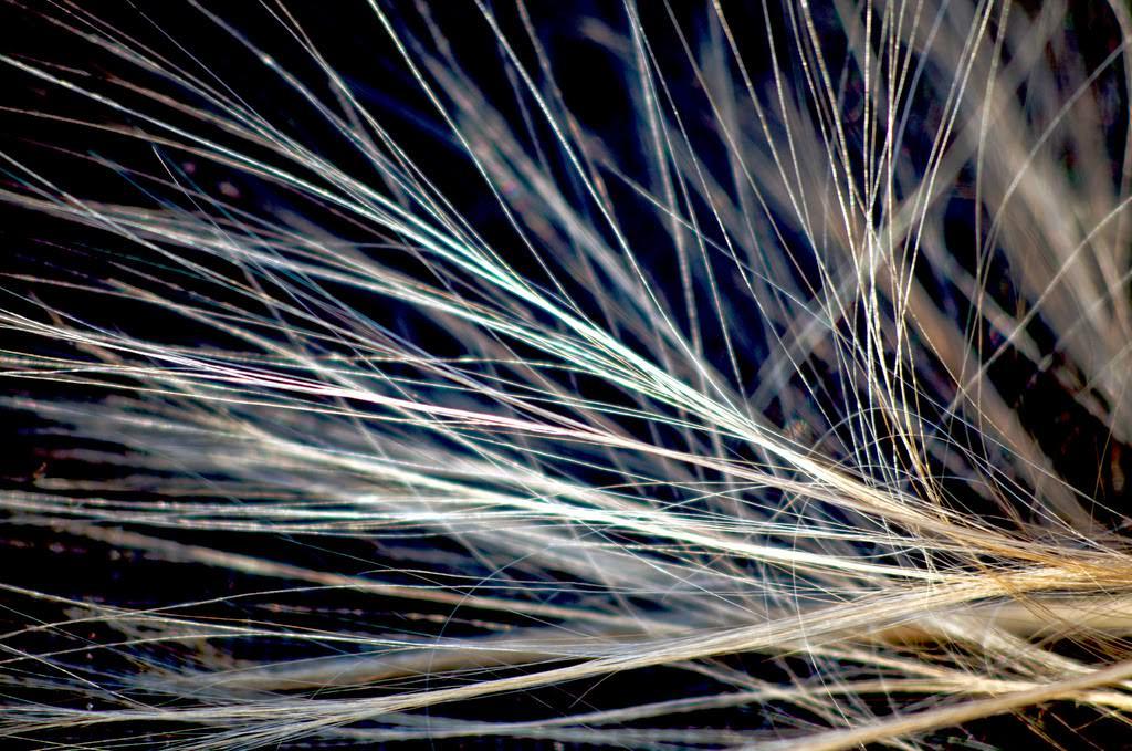 頭髮靜電怎麼辦?減少頭髮靜電的小技巧