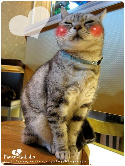 [臺北] 元氣貓主題餐廳|寵物餐廳 芝山 - 古露露的幸福蔬食物語
