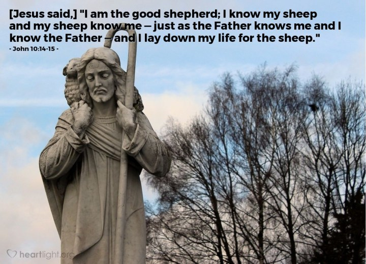"Illustration of John 10:14-15 — [Jesus said,] ""I am the good shepherd; I know my sheep and my sheep know me — just as the Father knows me and I know the Father — and I lay down my life for the sheep."""