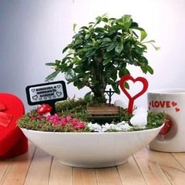Sevgiliye İlk Doğum Günü Hediyesi Canlı Minyatür Bahçe