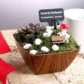 Arkadaşa Hediye Ahşap Saksılı Minyatür Bahçe