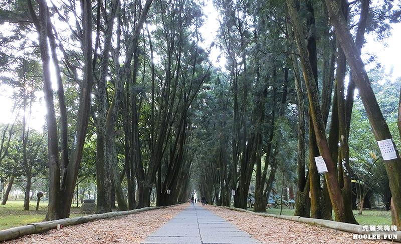 【旅遊】南投 彷彿漫步於歐洲林蔭大道★竹山超美景★下坪自然教育園區享受森林浴
