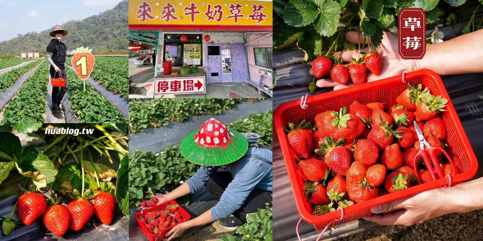 【苗栗大湖】草莓園推薦『來來牛奶草莓園』有專屬停車場,還有防曬可愛的草莓斗笠!現場還有草莓醋免費暢飲~採草莓首選推薦!