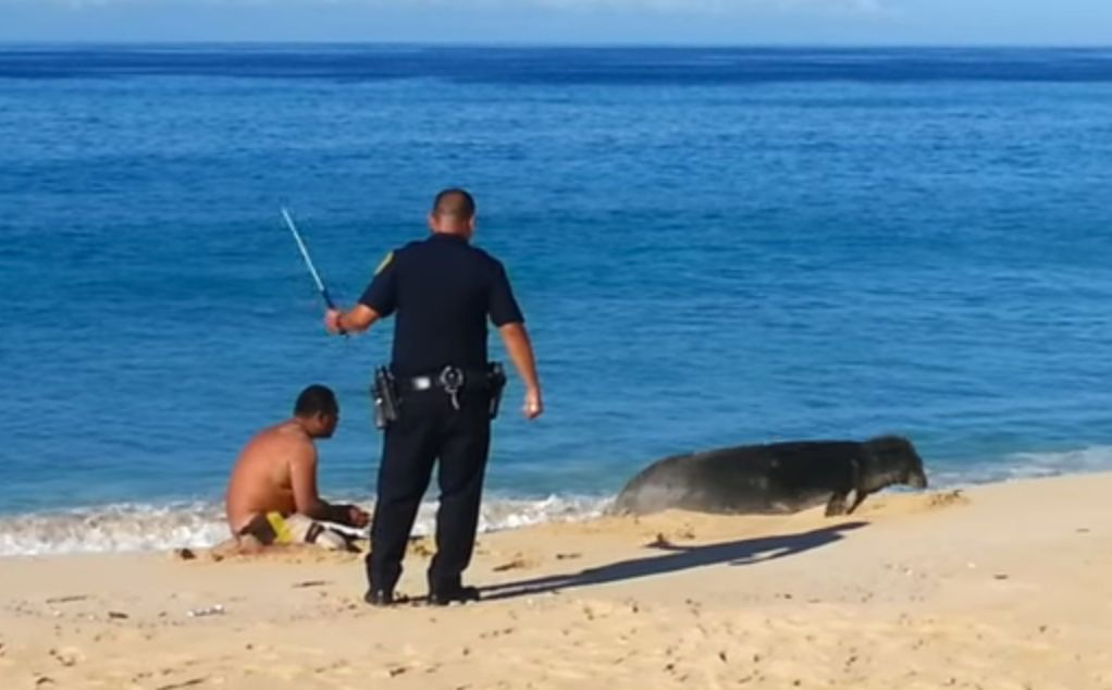 Image for Watch This Cop Beat A Man Harassing An Endangered Seal