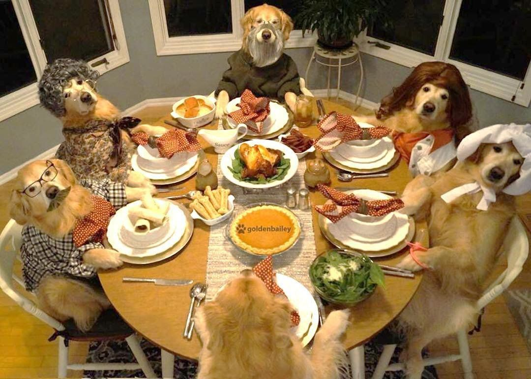 These Dogs Celebrating Thanksgiving Will Leave You Feeling
