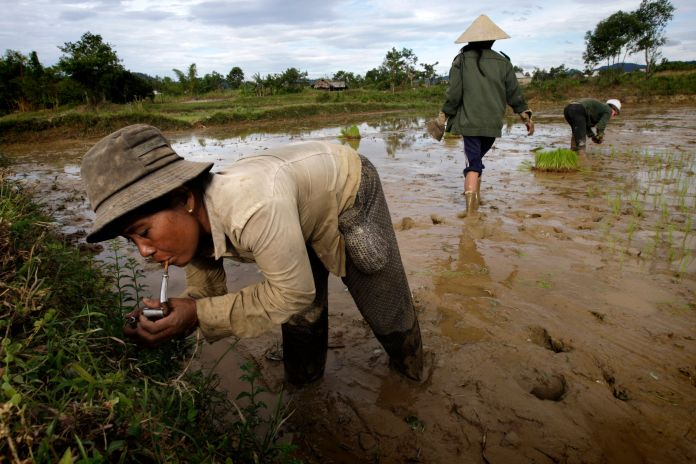 55 Years After Agent Orange Was Used In Vietnam, One Of Its Creators Is Thriving Here 55 Years After Agent Orange Was Used In Vietnam, One Of Its Creators Is Thriving Here 57aa2eef1700002600c7226c
