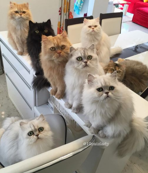 This Woman And Her 12 Feline Friends Give Us Life