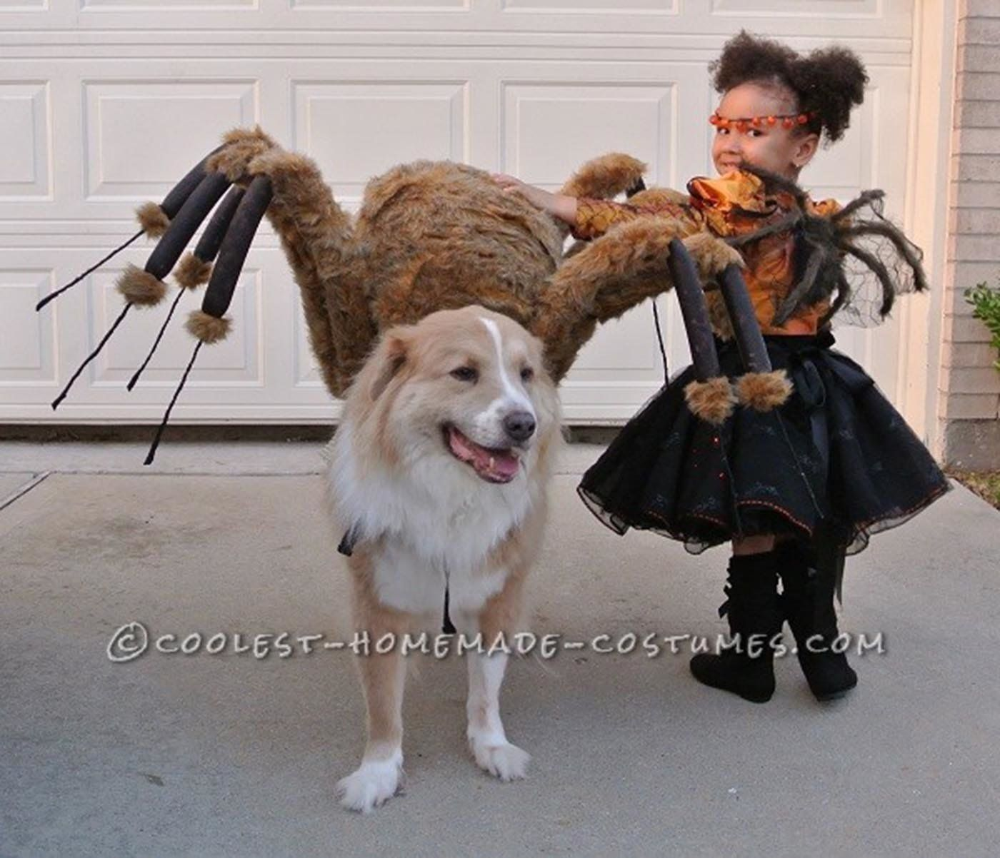 There is a long list of why dogs are such a wonderful companion to have, some of the reasons include their loyal nature, their loving disposition, and protective instincts. 30 Perfect Halloween Costumes For Kid And Dog Bffs Huffpost Life