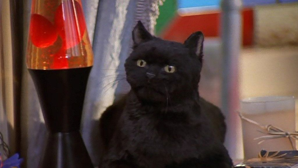 Salem was the Spellmans' cat, who was actuallya 500-year-old witch sentenced to spend 100 years as a feline after committing crimes in the Other Realm.