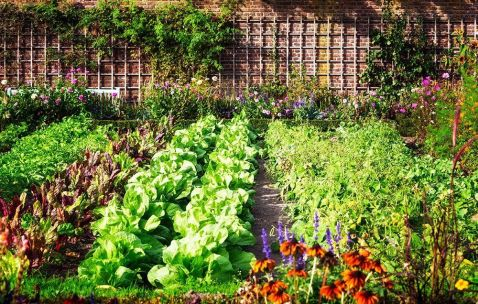 Image result for kate middleton vegetable garden
