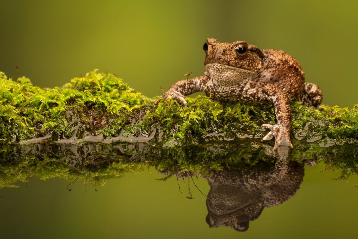 How To Make Your Garden Toad And Frog-Friendly
