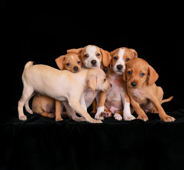 """<strong>Second Place</strong><br>""""Sticking Together""""<br>Beagle mix puppies, U.S."""