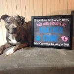 50 Adorable Dogs Who Shared Their Family S Pregnancy News In The Best Way Huffpost Life