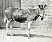 11 animals that are now extinct and it is our guilt puff